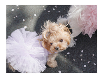 Puppy Angel Tutu Dog Dress - Purple