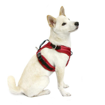 Pioneer Dog Harness - Red