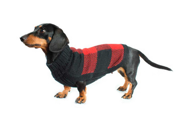Alpaca Dog Sweater - Buffalo Plaid