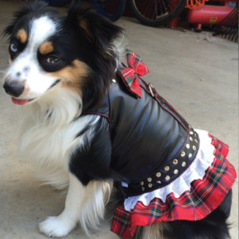 Harness Dress Biker Dog