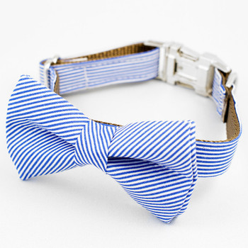 Palms Springs Bow Tie Dog Collar