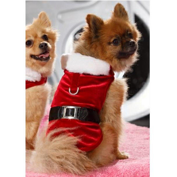 Santa Claws Christmas Dog Harness