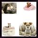 Susan Lanci Dog Cuddle Cups & Blankets