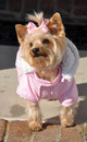 Ruffin It Pink Dog Snow Suit