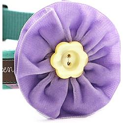 violet-lavender-velvet-flower.250.jpg