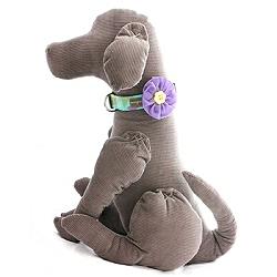 violet-lavender-velvet-flower.dog.250.jpg