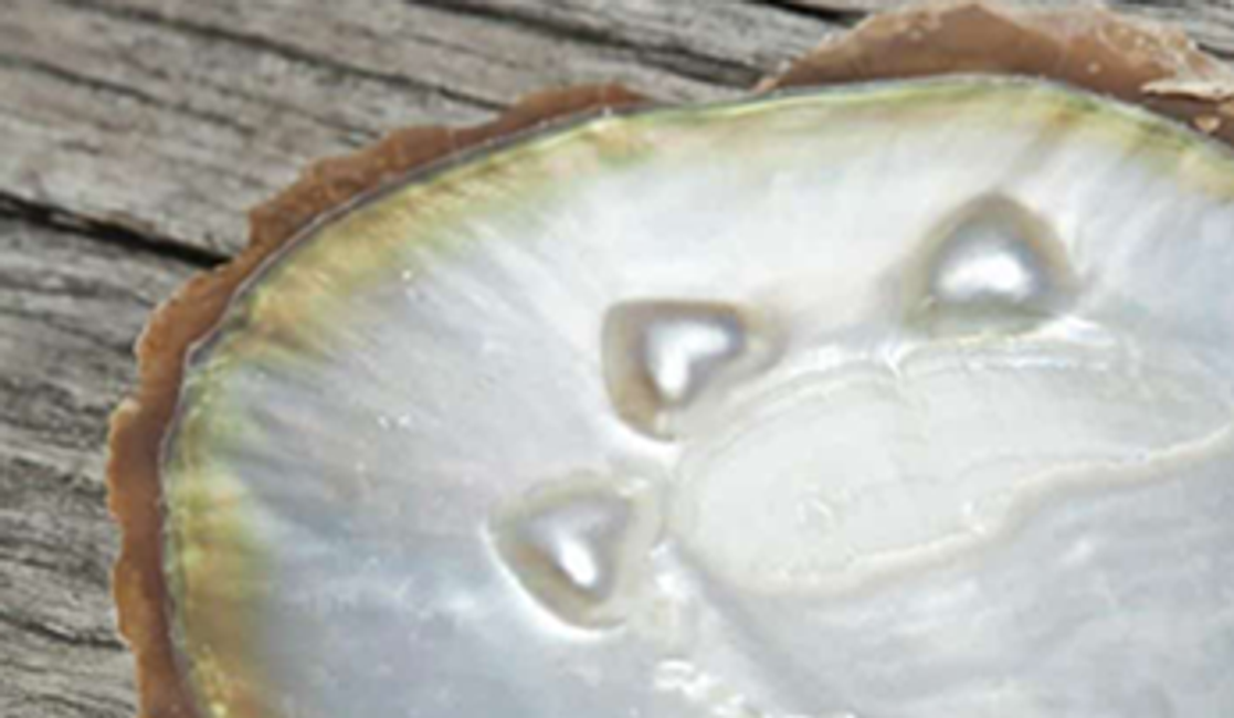 How Are Mother-of-Pearl Watch Dials Made?