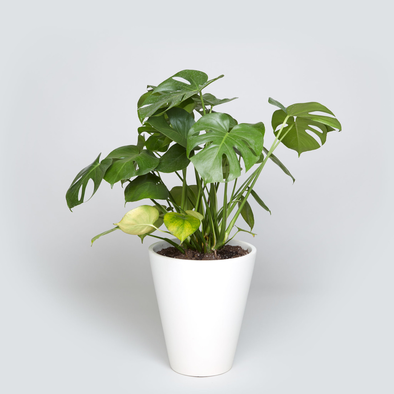 The Case Study Funnel, Monstera