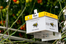 Bombus Impatiens - Natupol Excel Start Up