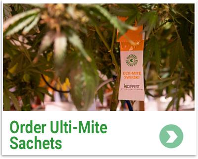 Order UltiMite Sachets