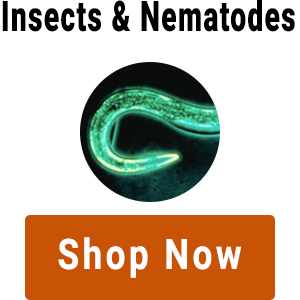 shop-for-insects-and-nematodes.png