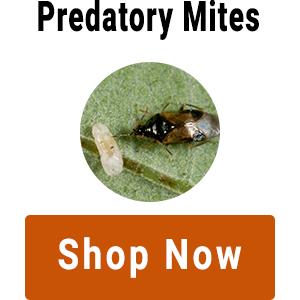 shop-predatory-mites.png