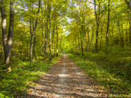 The Benefits Of Forest Bathing