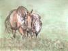 Original watercolor horse painting.