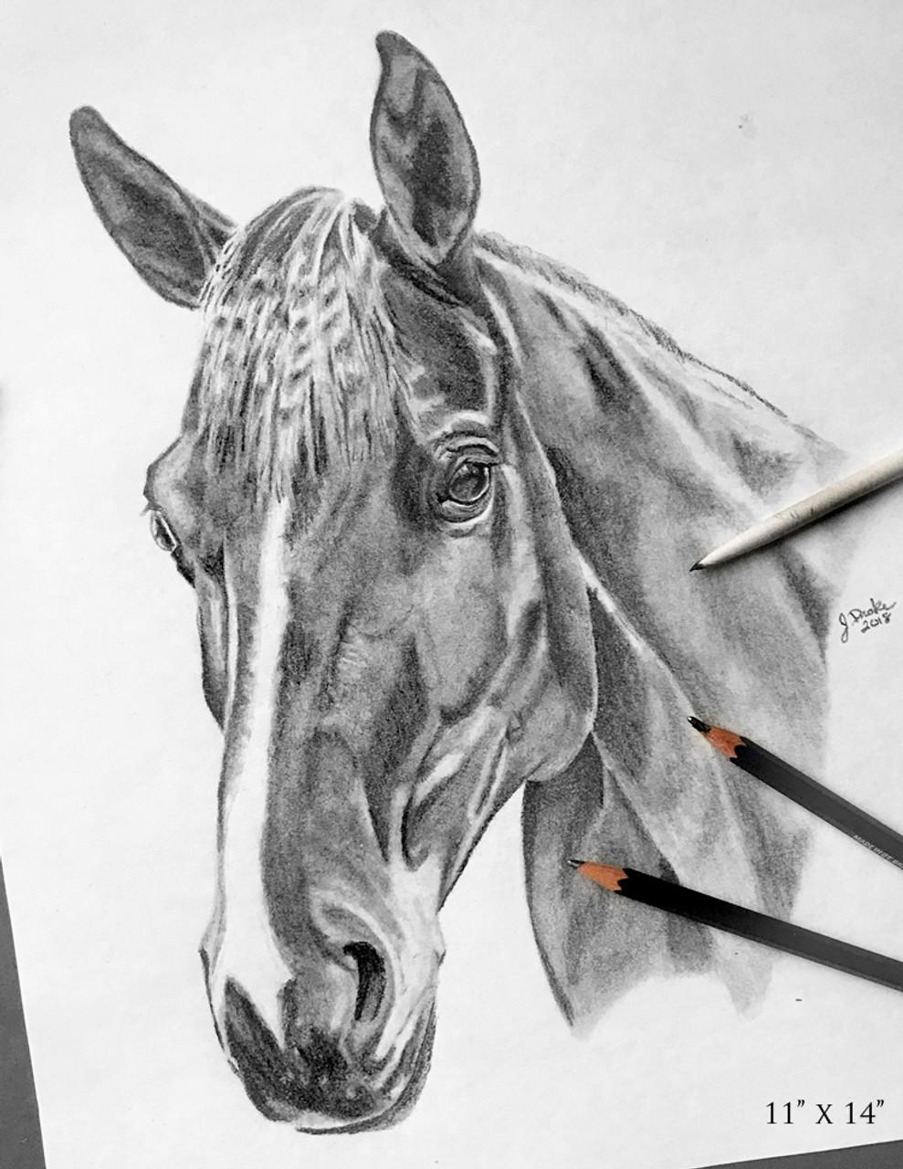 Christmas Horse Drawing.Custom Graphite Horse Head Study