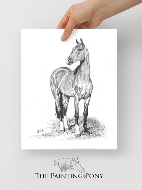 Akhal-Teke Stallion Graphite Fine Art Print