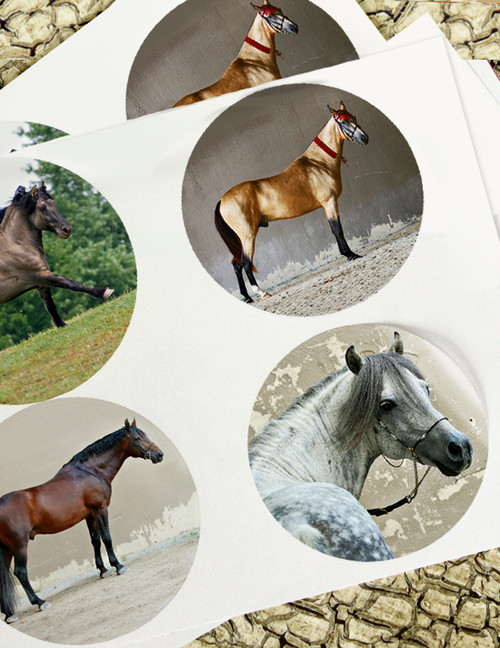 Rare Endangered Horse Breeds Stickers