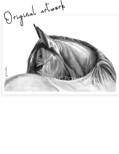 "Horse Head Study ""Looking"" Graphite Drawing"