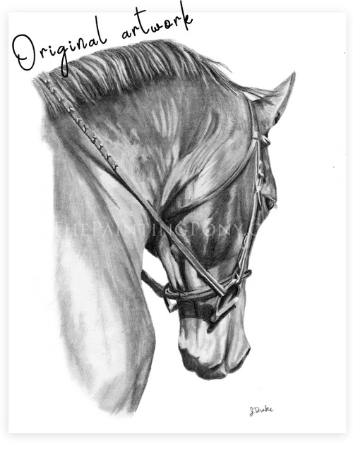 "Horse Head Study ""Collected""Graphite Drawing"