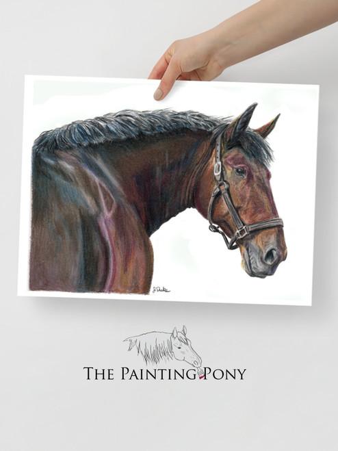 Cleveland Bay Horse Head Fine Art Print