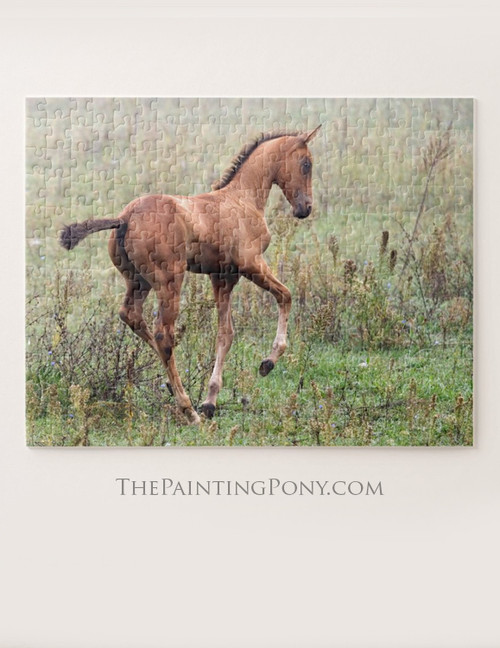 Young Akhal-teke Horse Foal Equestrian Jigsaw Puzzle