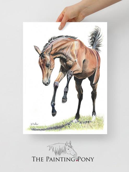 Playful Young Horse Equestrian Art Print