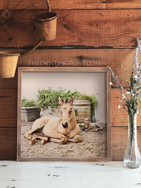 Young Sleeping Horse Foal Art Print