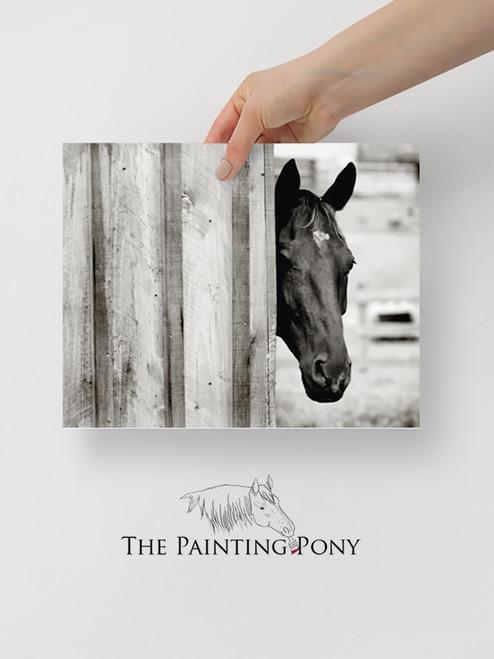 Curious Black Horse Fine Art Print