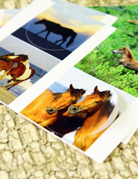 Chicoteague Pony Stickers