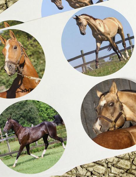 Akhal-teke Horse Stickers