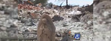A Hope-Filled Story: Mary Statue Survives Hurricane Devastation