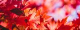 A Prayer of Thanksgiving & Gratitude