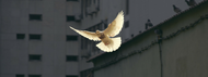 Gain a New Understanding of the Holy Spirit's Role in Your Life