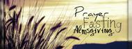 The Lenten Program: How To Prepare For Your Most Fruitful Lent Yet!