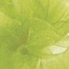 Kiwi Simply Sheer