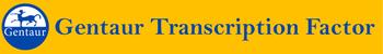 Gentaur Transcription Factor