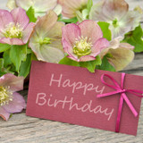 How Flowers Can Be The Perfect Birthday Gift