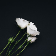 Choosing The Best Flowers For Remembrance