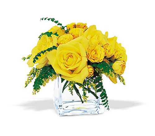 Yellow Roses Cube