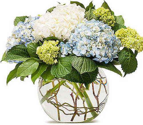 Mighty Hydrangea - ON SALE!!!  1/2 Price