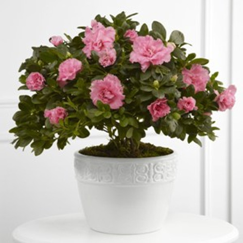 Vibrant Sympathy Planter