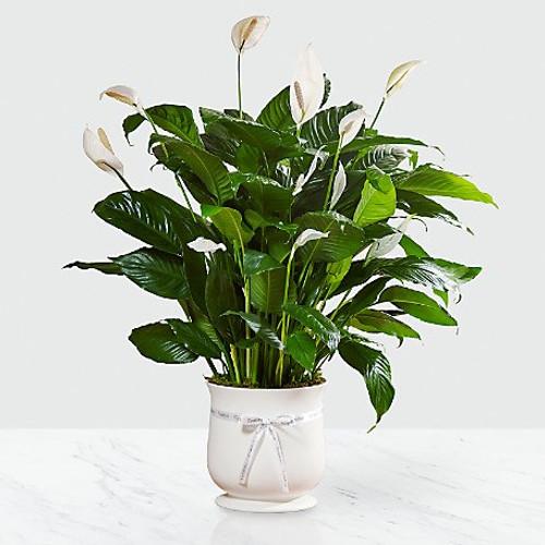 "Chicago Florist Comfort Planter 6"""