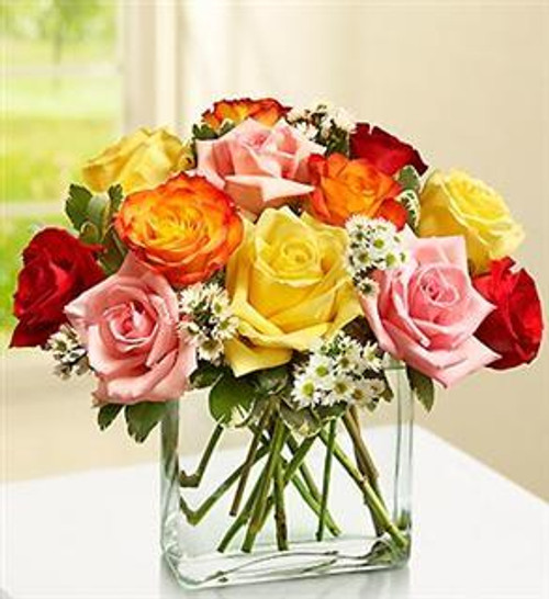 Modern Mix Roses - One Dozen