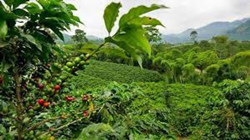 COSTA RICA tarrazu raw green coffee beans From $20.25/kg