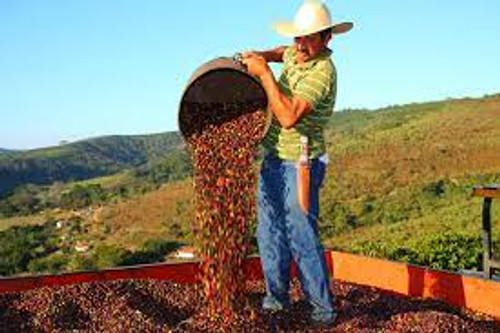 BRAZIL SANTOS Raw green coffee beans From $16.65/kg