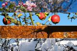 God's Love Through the Seasons