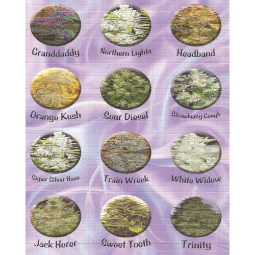 Buy a High Times Super Strains Blotter Online from Tree Huggers Co-op
