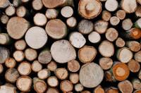 Oak Wood (FA)