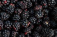 Blackberry (FA)