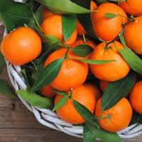 Orange Mandarin (TDA)
